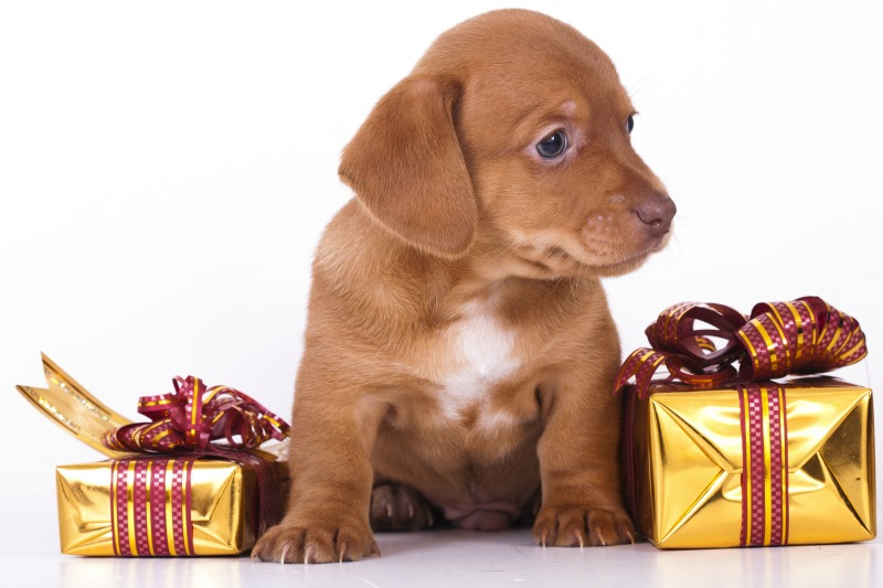 Doggygifts.com